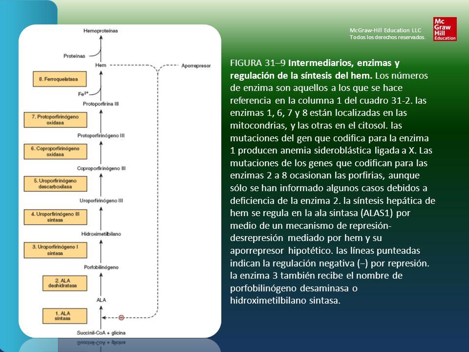FIGURA 31–9 Intermediarios, enzimas y regulación de la síntesis del hem. Los números de enzima son aquellos a los que se hace referencia en la columna