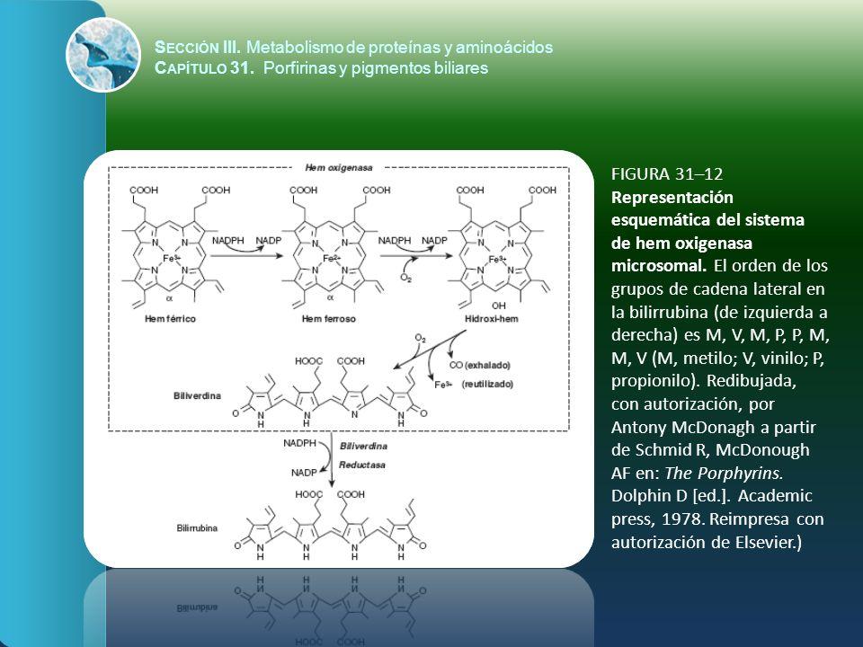 FIGURA 31–12 Representación esquemática del sistema de hem oxigenasa microsomal. El orden de los grupos de cadena lateral en la bilirrubina (de izquie
