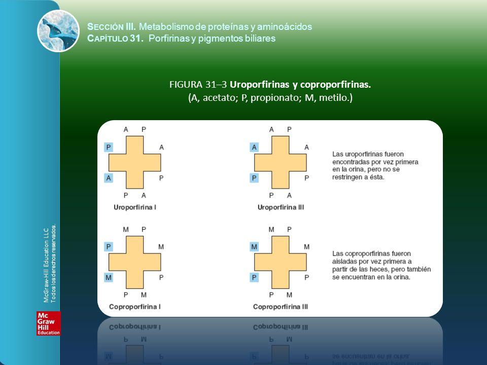 FIGURA 31–3 Uroporfirinas y coproporfirinas. (A, acetato; P, propionato; M, metilo.) S ECCIÓN III. Metabolismo de proteínas y aminoácidos C APÍTULO 31