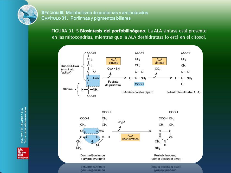 FIGURA 31–5 Biosíntesis del porfobilinógeno. La ALA sintasa está presente en las mitocondrias, mientras que la ALA deshidratasa lo está en el citosol.