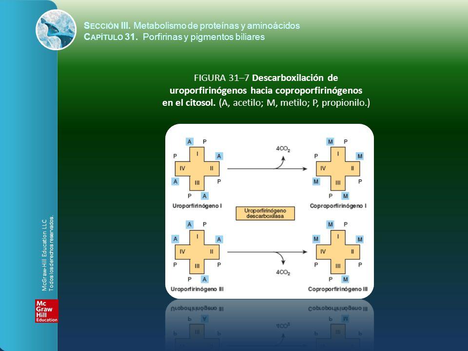 FIGURA 31–7 Descarboxilación de uroporfirinógenos hacia coproporfirinógenos en el citosol. (A, acetilo; M, metilo; P, propionilo.) S ECCIÓN III. Metab