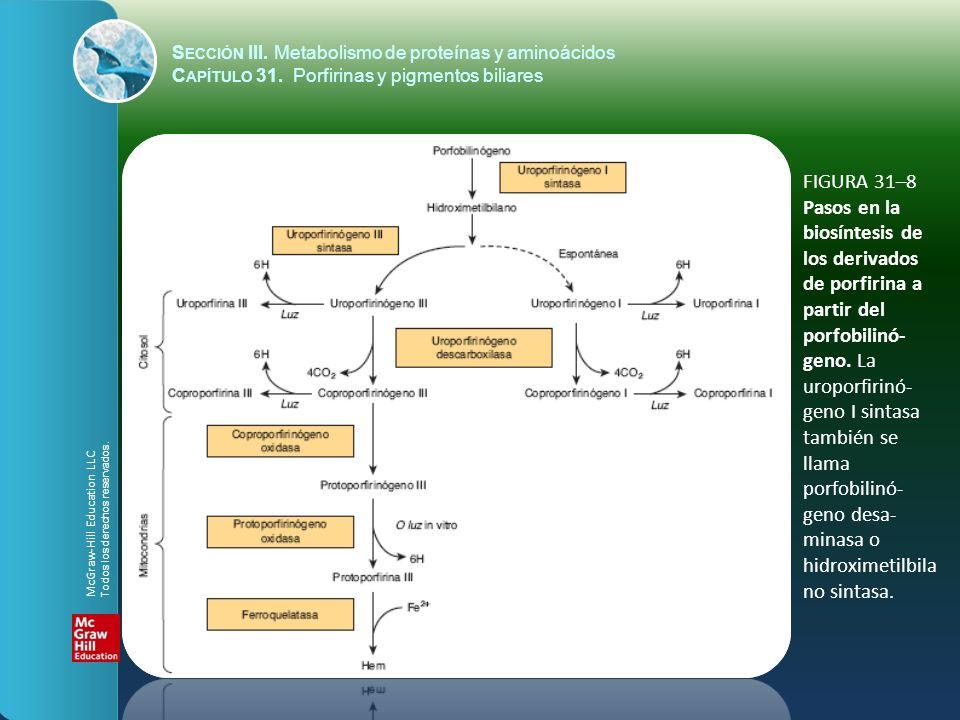FIGURA 31–8 Pasos en la biosíntesis de los derivados de porfirina a partir del porfobilinó- geno. La uroporfirinó- geno I sintasa también se llama por