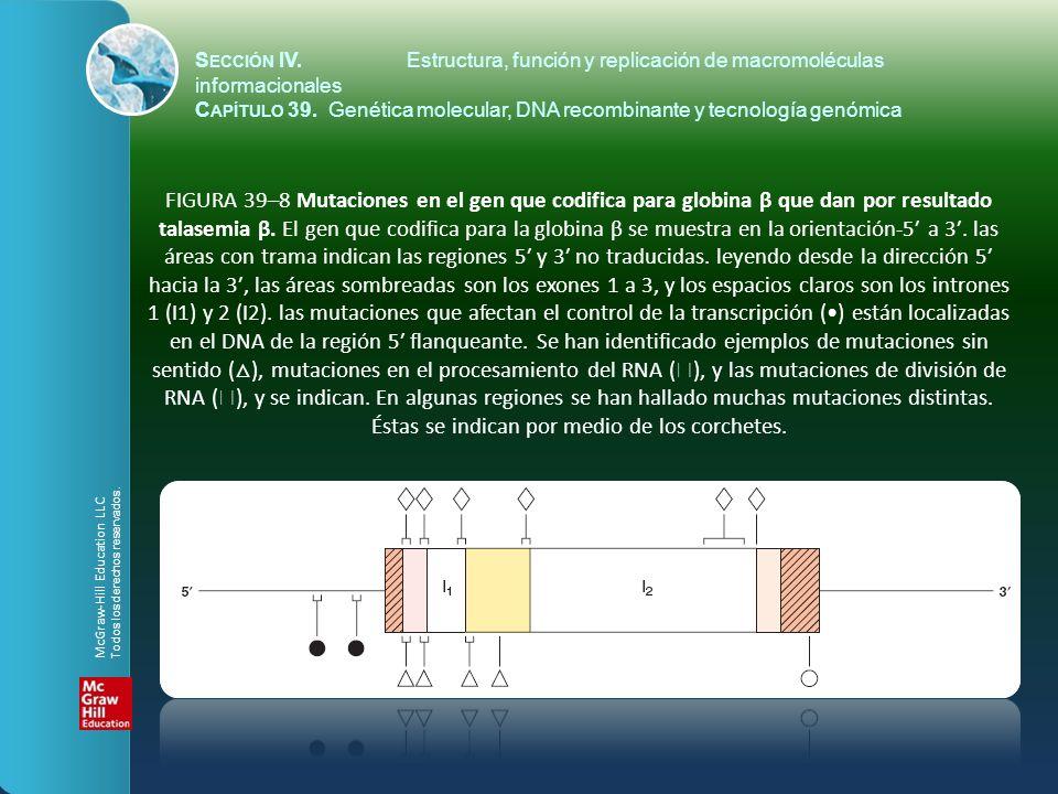 FIGURA 39–8 Mutaciones en el gen que codifica para globina β que dan por resultado talasemia β. El gen que codifica para la globina β se muestra en la