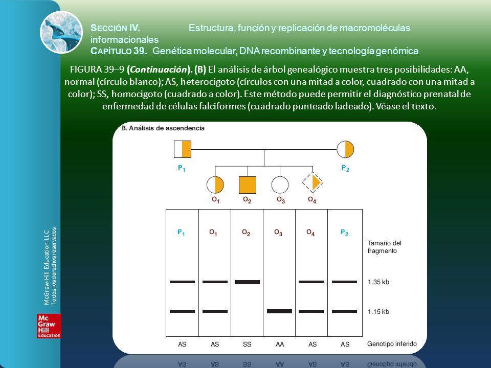 FIGURA 39–9 (Continuación). (B) El análisis de árbol genealógico muestra tres posibilidades: AA, normal (círculo blanco); AS, heterocigoto (círculos c