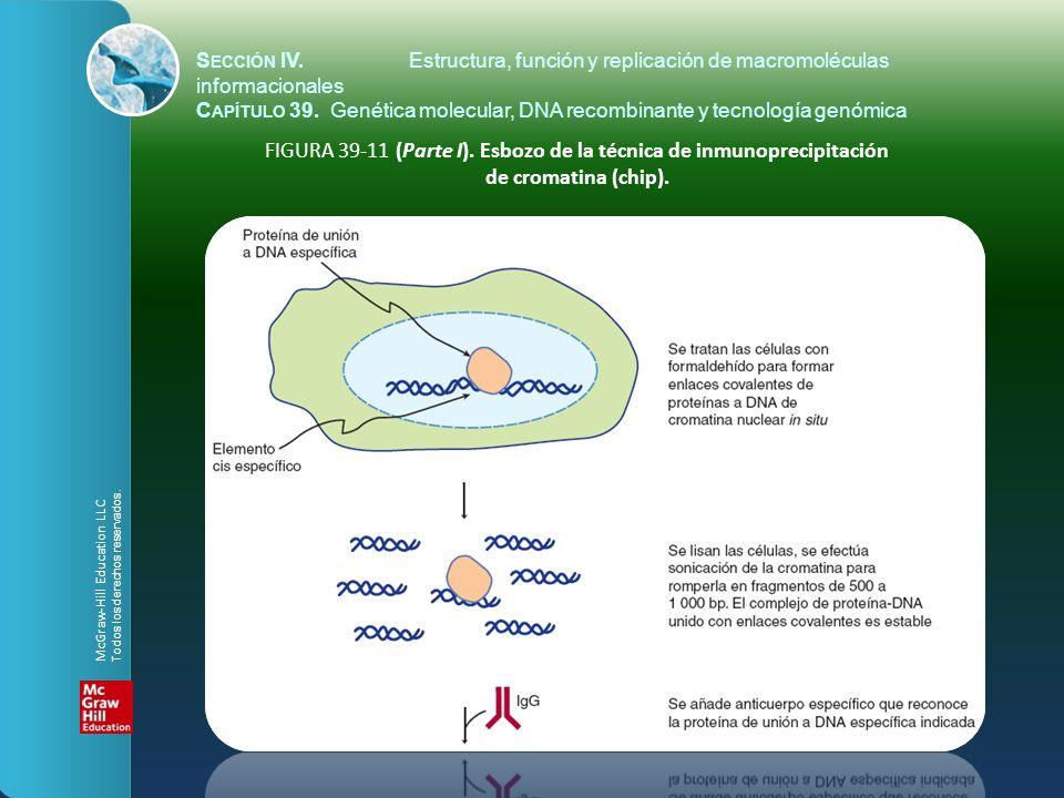 FIGURA 39-11 (Parte I). Esbozo de la técnica de inmunoprecipitación de cromatina (chip). S ECCIÓN IV.Estructura, función y replicación de macromolécul