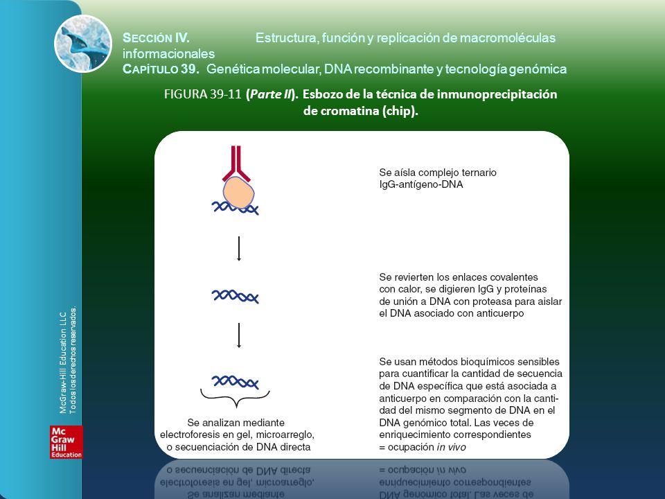 FIGURA 39-11 (Parte II). Esbozo de la técnica de inmunoprecipitación de cromatina (chip). S ECCIÓN IV.Estructura, función y replicación de macromolécu