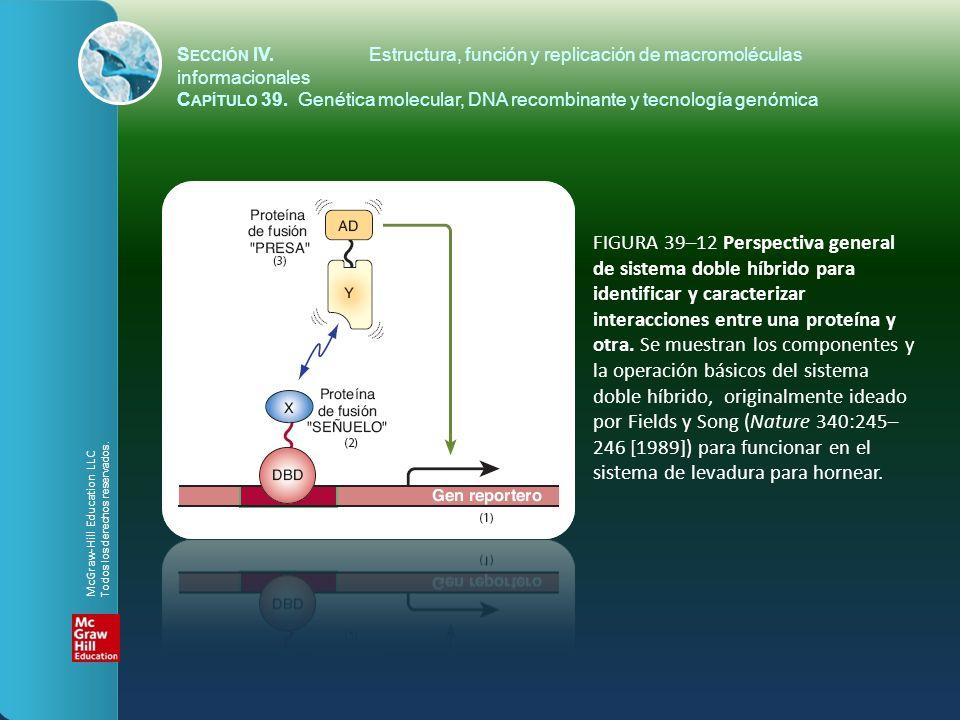 FIGURA 39–12 Perspectiva general de sistema doble híbrido para identificar y caracterizar interacciones entre una proteína y otra. Se muestran los com