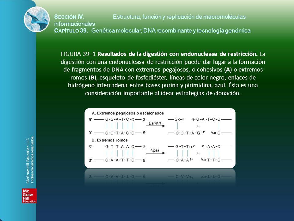 S ECCIÓN IV.Estructura, función y replicación de macromoléculas informacionales C APÍTULO 39. Genética molecular, DNA recombinante y tecnología genómi