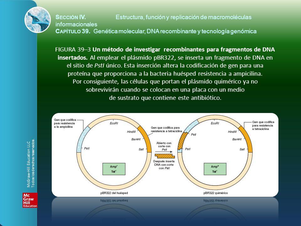 FIGURA 39–3 Un método de investigar recombinantes para fragmentos de DNA insertados. Al emplear el plásmido pBR322, se inserta un fragmento de DNA en