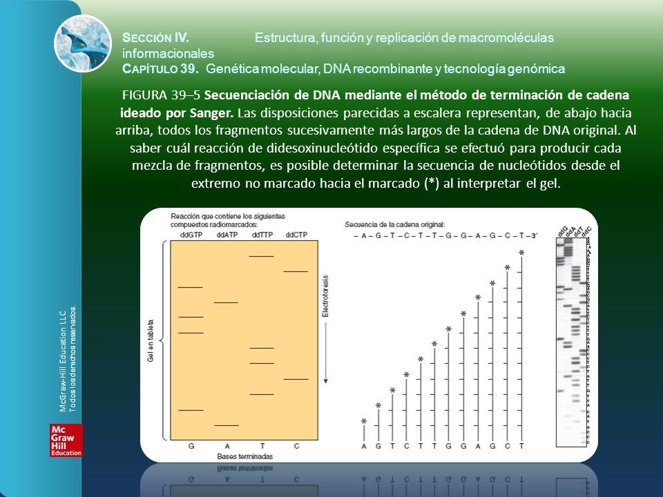 FIGURA 39–5 Secuenciación de DNA mediante el método de terminación de cadena ideado por Sanger. Las disposiciones parecidas a escalera representan, de