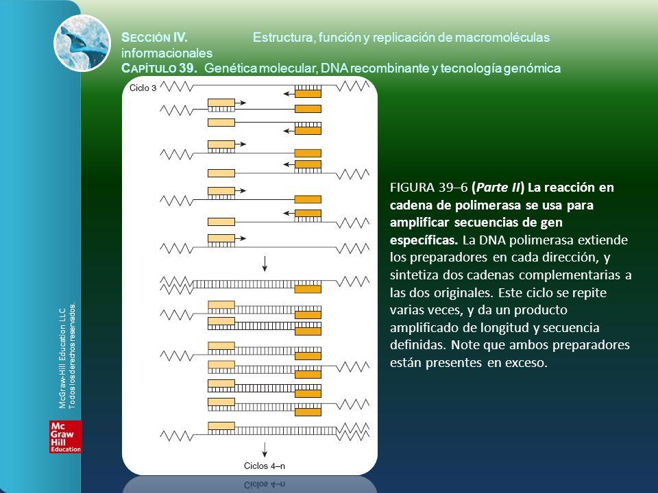 FIGURA 39–6 (Parte II) La reacción en cadena de polimerasa se usa para amplificar secuencias de gen específicas. La DNA polimerasa extiende los prepar