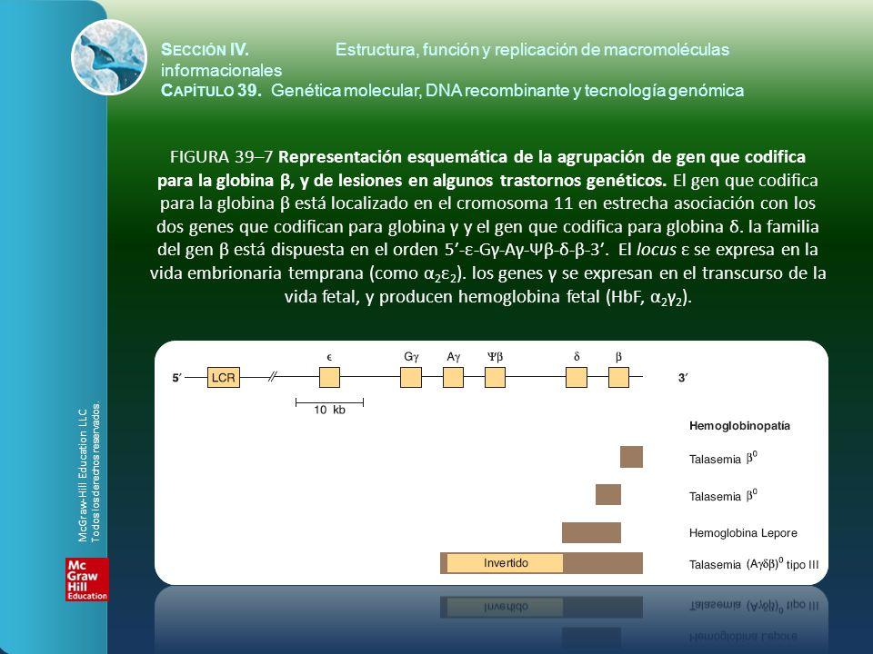 FIGURA 39–7 Representación esquemática de la agrupación de gen que codifica para la globina β, y de lesiones en algunos trastornos genéticos. El gen q