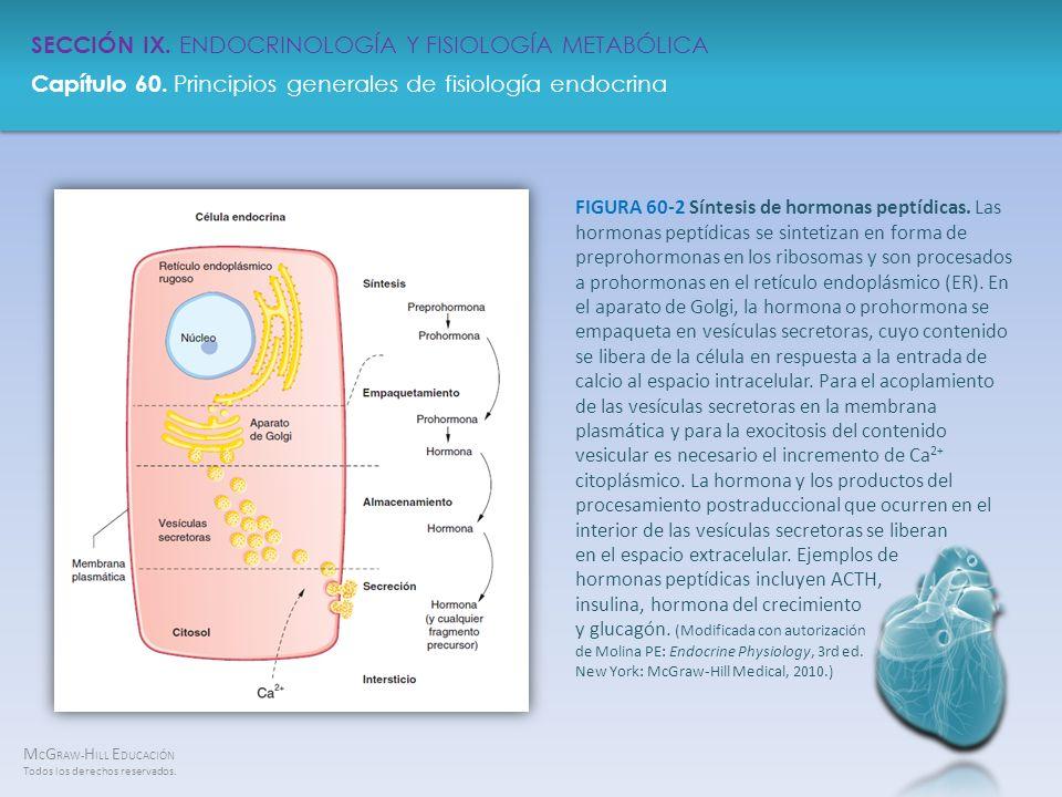 M C G RAW- H ILL E DUCACIÓN Todos los derechos reservados. Capítulo 60. Principios generales de fisiología endocrina SECCIÓN IX. ENDOCRINOLOGÍA Y FISI
