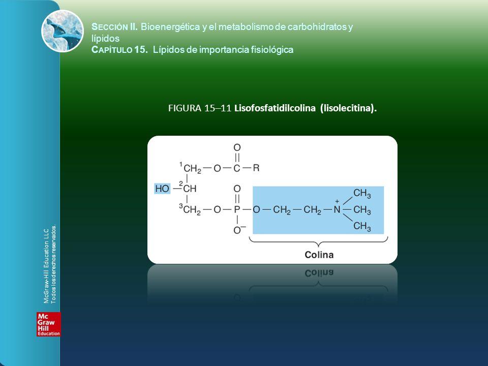 FIGURA 15–11 Lisofosfatidilcolina (lisolecitina). S ECCIÓN II. Bioenergética y el metabolismo de carbohidratos y lípidos C APÍTULO 15. Lípidos de impo