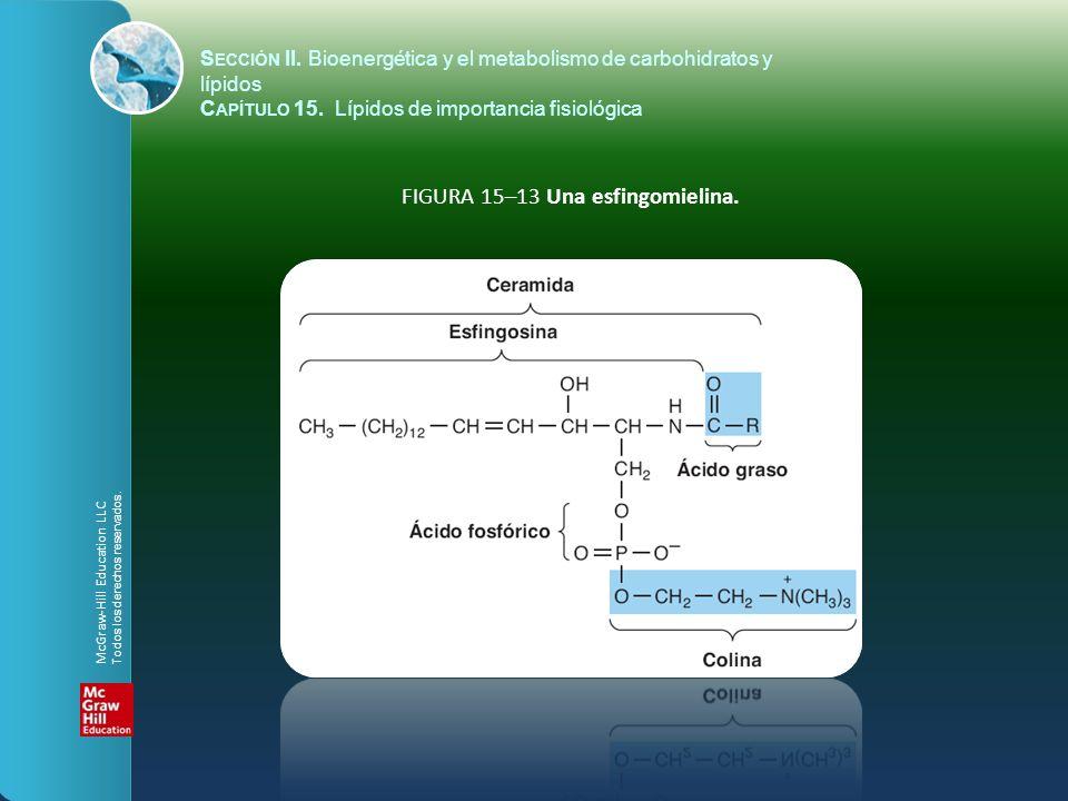 FIGURA 15–13 Una esfingomielina. S ECCIÓN II. Bioenergética y el metabolismo de carbohidratos y lípidos C APÍTULO 15. Lípidos de importancia fisiológi