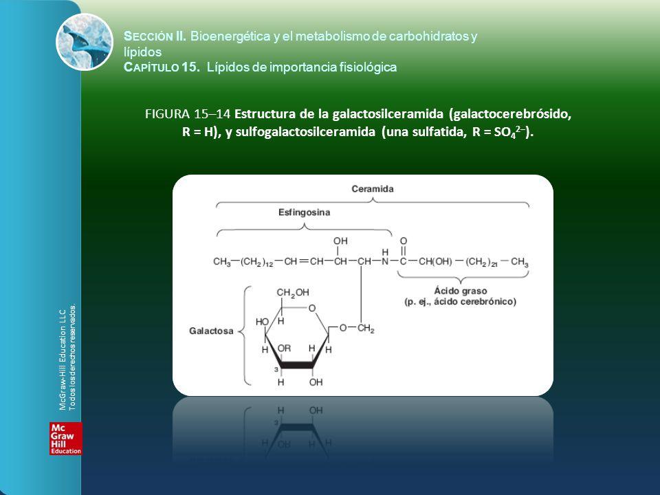 FIGURA 15–14 Estructura de la galactosilceramida (galactocerebrósido, R = H), y sulfogalactosilceramida (una sulfatida, R = SO 4 2– ). S ECCIÓN II. Bi