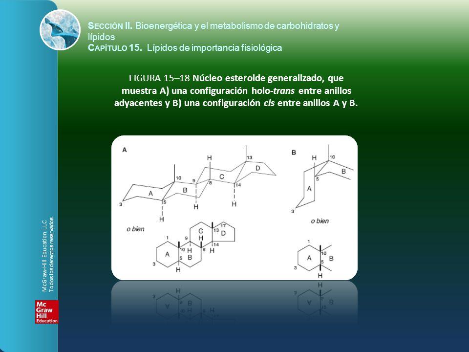 FIGURA 15–18 Núcleo esteroide generalizado, que muestra A) una configuración holo-trans entre anillos adyacentes y B) una configuración cis entre anil