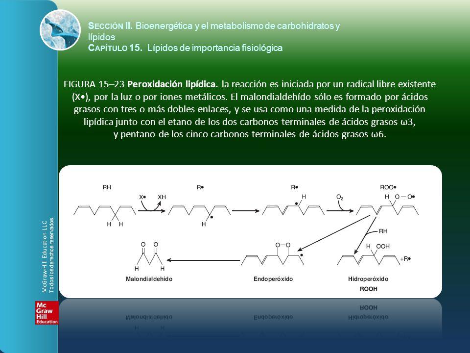FIGURA 15–23 Peroxidación lipídica. la reacción es iniciada por un radical libre existente (X), por la luz o por iones metálicos. El malondialdehído s