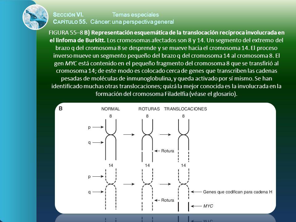 S ECCIÓN VI.Temas especiales C APÍTULO 55. Cáncer: una perspectiva general FIGURA 55–8 B) Representación esquemática de la translocación recíproca inv