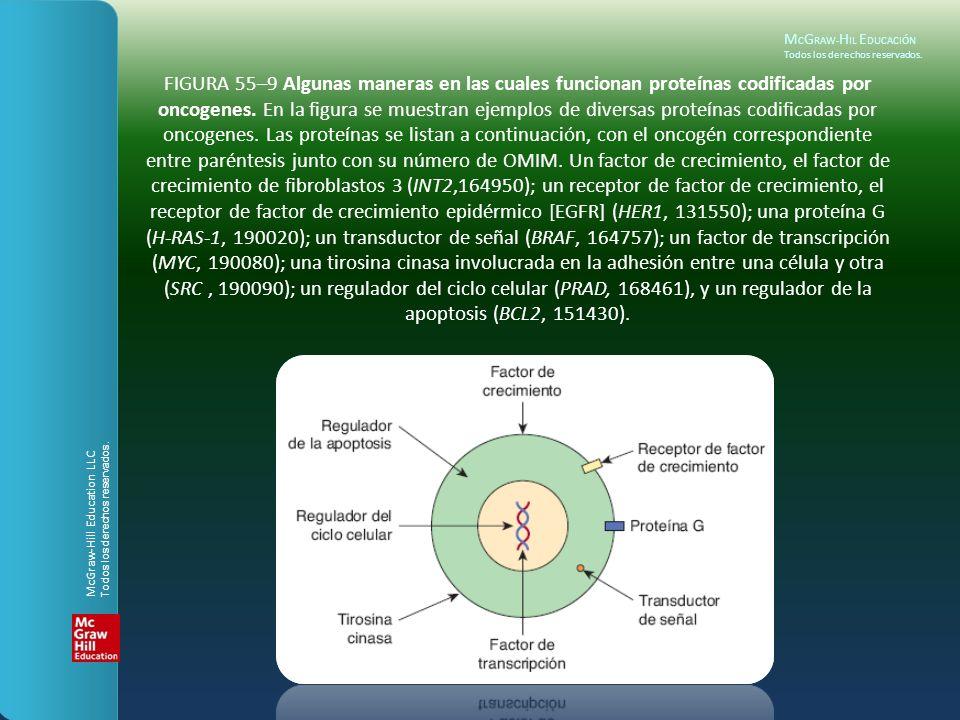 M C G RAW- H IL E DUCACIÓN Todos los derechos reservados. FIGURA 55–9 Algunas maneras en las cuales funcionan proteínas codificadas por oncogenes. En