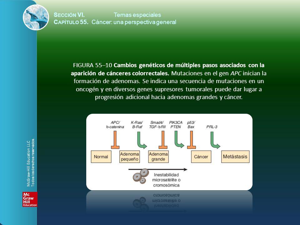 S ECCIÓN VI.Temas especiales C APÍTULO 55. Cáncer: una perspectiva general FIGURA 55–10 Cambios genéticos de múltiples pasos asociados con la aparició