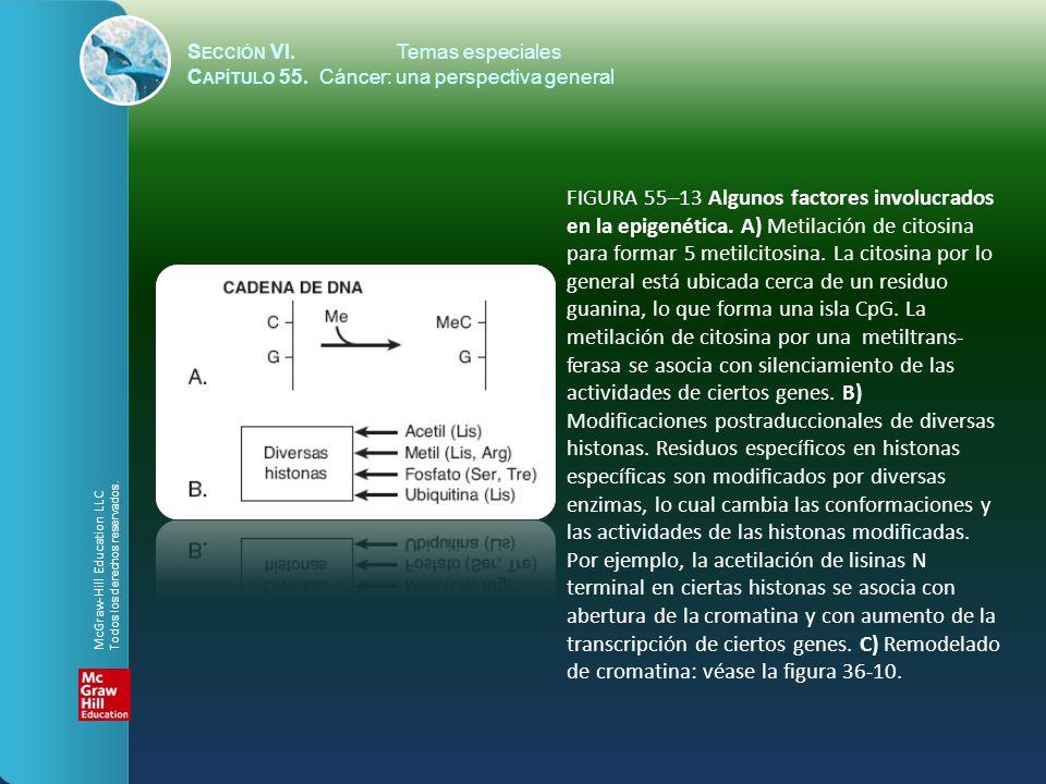 S ECCIÓN VI.Temas especiales C APÍTULO 55. Cáncer: una perspectiva general FIGURA 55–13 Algunos factores involucrados en la epigenética. A) Metilación