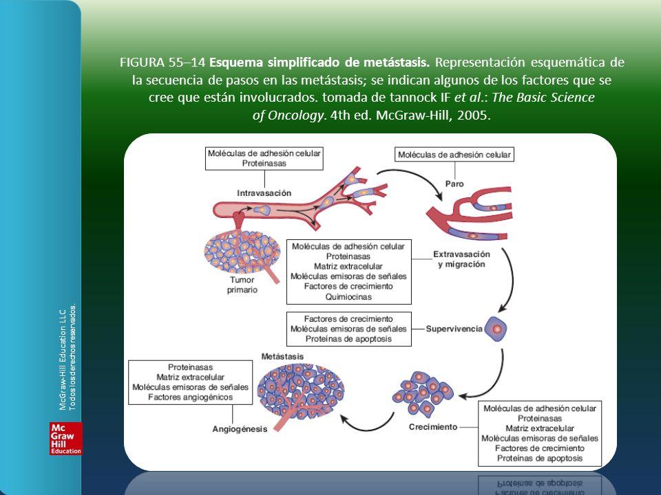 FIGURA 55–14 Esquema simplificado de metástasis. Representación esquemática de la secuencia de pasos en las metástasis; se indican algunos de los fact