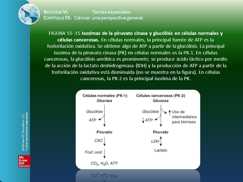 S ECCIÓN VI.Temas especiales C APÍTULO 55. Cáncer: una perspectiva general FIGURA 55–15 Isozimas de la piruvato cinasa y glucólisis en células normale