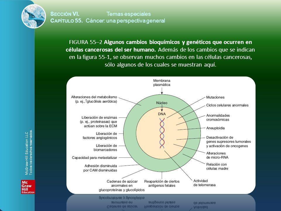 S ECCIÓN VI.Temas especiales C APÍTULO 55. Cáncer: una perspectiva general FIGURA 55–2 Algunos cambios bioquímicos y genéticos que ocurren en células
