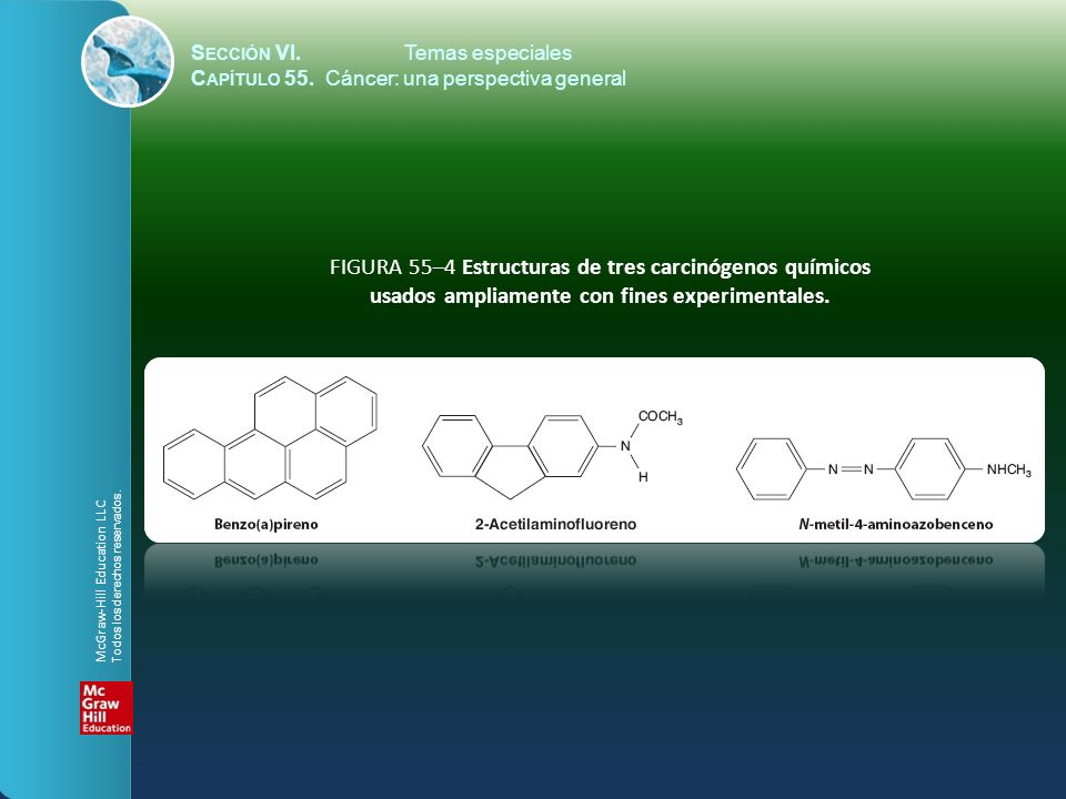 S ECCIÓN VI.Temas especiales C APÍTULO 55. Cáncer: una perspectiva general FIGURA 55–4 Estructuras de tres carcinógenos químicos usados ampliamente co