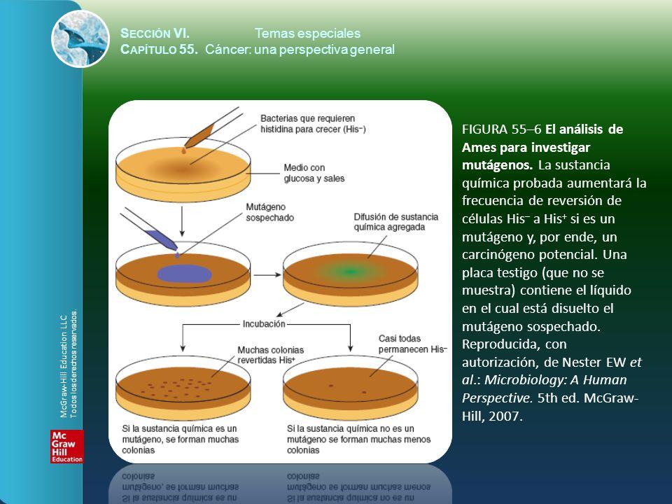 S ECCIÓN VI.Temas especiales C APÍTULO 55. Cáncer: una perspectiva general FIGURA 55–6 El análisis de Ames para investigar mutágenos. La sustancia quí
