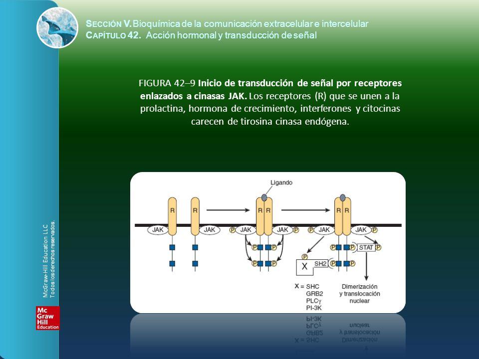 S ECCIÓN V.Bioquímica de la comunicación extracelular e intercelular C APÍTULO 42. Acción hormonal y transducción de señal FIGURA 42–9 Inicio de trans