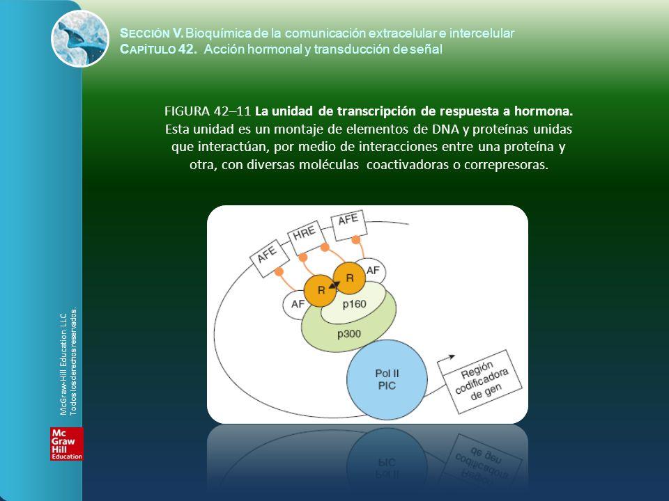 S ECCIÓN V.Bioquímica de la comunicación extracelular e intercelular C APÍTULO 42. Acción hormonal y transducción de señal FIGURA 42–11 La unidad de t