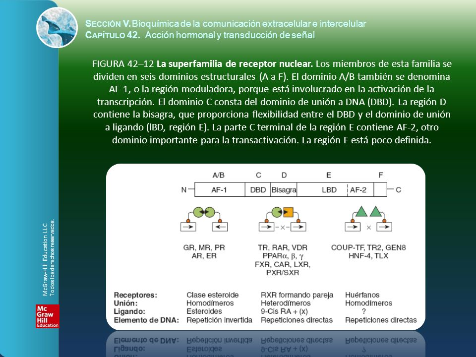S ECCIÓN V.Bioquímica de la comunicación extracelular e intercelular C APÍTULO 42. Acción hormonal y transducción de señal FIGURA 42–12 La superfamili