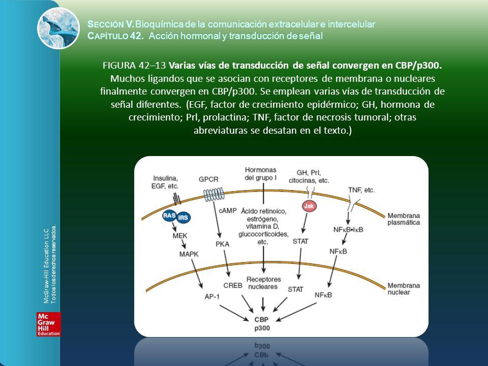 S ECCIÓN V.Bioquímica de la comunicación extracelular e intercelular C APÍTULO 42. Acción hormonal y transducción de señal FIGURA 42–13 Varias vías de