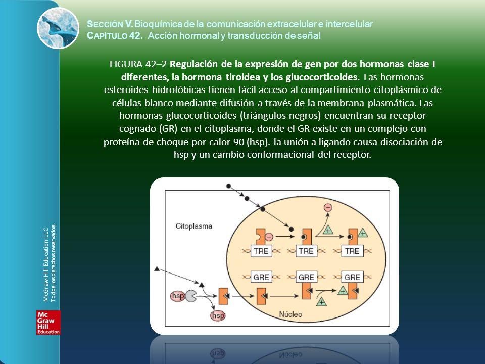 S ECCIÓN V.Bioquímica de la comunicación extracelular e intercelular C APÍTULO 42. Acción hormonal y transducción de señal FIGURA 42–2 Regulación de l