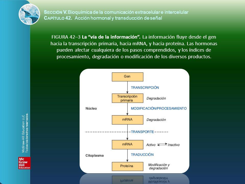 S ECCIÓN V.Bioquímica de la comunicación extracelular e intercelular C APÍTULO 42. Acción hormonal y transducción de señal FIGURA 42–3 La vía de la in