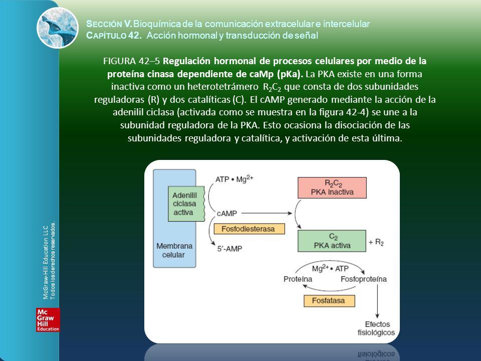 S ECCIÓN V.Bioquímica de la comunicación extracelular e intercelular C APÍTULO 42. Acción hormonal y transducción de señal FIGURA 42–5 Regulación horm