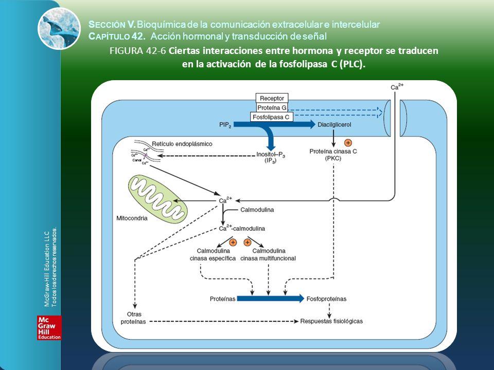 S ECCIÓN V.Bioquímica de la comunicación extracelular e intercelular C APÍTULO 42. Acción hormonal y transducción de señal FIGURA 42-6 Ciertas interac