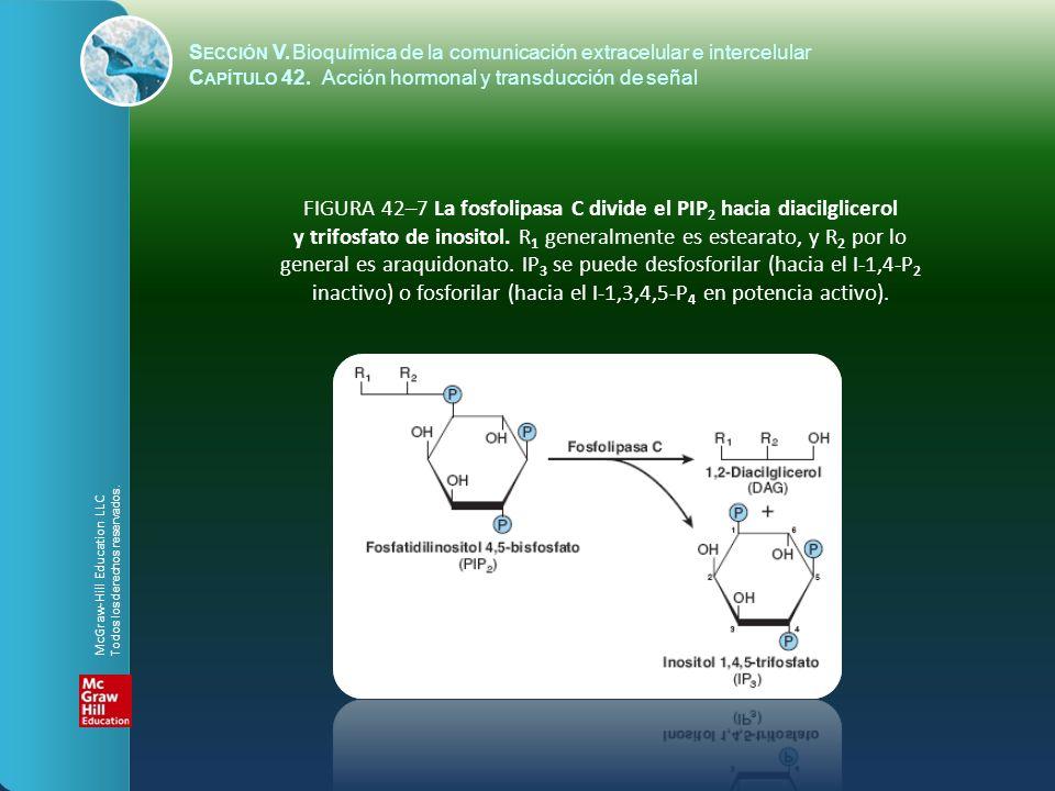 S ECCIÓN V.Bioquímica de la comunicación extracelular e intercelular C APÍTULO 42. Acción hormonal y transducción de señal FIGURA 42–7 La fosfolipasa