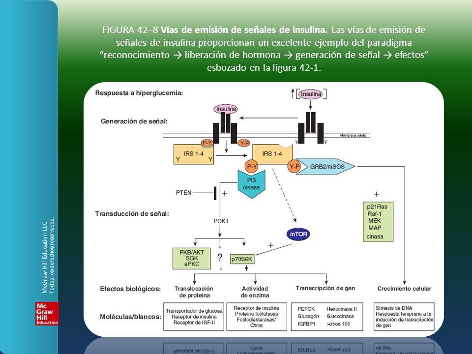 FIGURA 42–8 Vías de emisión de señales de insulina. Las vías de emisión de señales de insulina proporcionan un excelente ejemplo del paradigma reconoc
