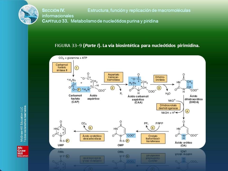 FIGURA 33–9 (Parte I). La vía biosintética para nucleótidos pirimidina. S ECCIÓN IV.Estructura, función y replicación de macromoléculas informacionale