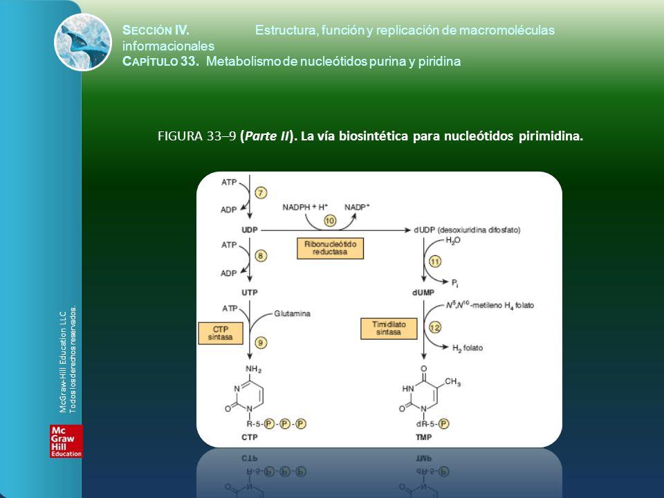 FIGURA 33–9 (Parte II).La vía biosintética para nucleótidos pirimidina.