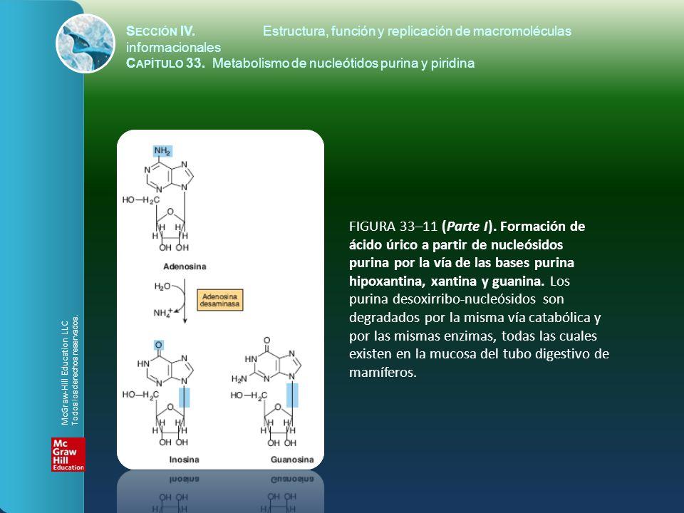 FIGURA 33–11 (Parte I). Formación de ácido úrico a partir de nucleósidos purina por la vía de las bases purina hipoxantina, xantina y guanina. Los pur