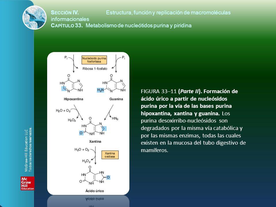 FIGURA 33–11 (Parte II). Formación de ácido úrico a partir de nucleósidos purina por la vía de las bases purina hipoxantina, xantina y guanina. Los pu