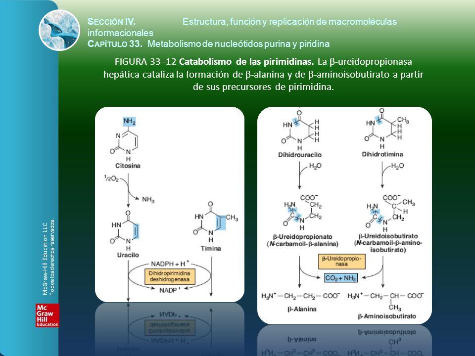 FIGURA 33–12 Catabolismo de las pirimidinas. La β-ureidopropionasa hepática cataliza la formación de β-alanina y de β-aminoisobutirato a partir de sus