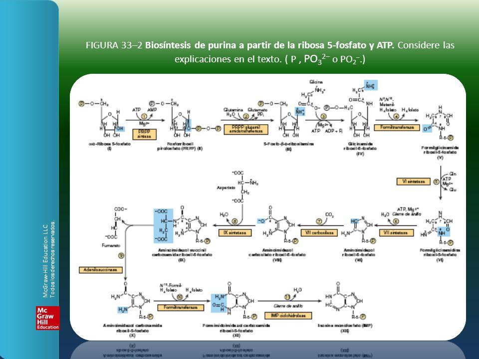FIGURA 33–2 Biosíntesis de purina a partir de la ribosa 5-fosfato y ATP. Considere las explicaciones en el texto. ( P, PO 3 2– o PO 2 –.) McGraw-Hill