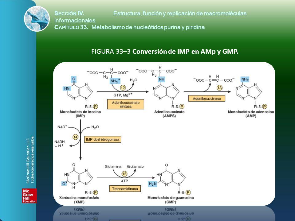 FIGURA 33–3 Conversión de IMP en AMp y GMP. S ECCIÓN IV.Estructura, función y replicación de macromoléculas informacionales C APÍTULO 33. Metabolismo