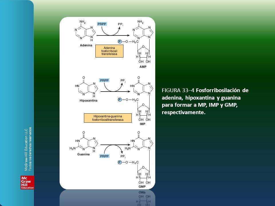 FIGURA 33–4 Fosforribosilación de adenina, hipoxantina y guanina para formar a MP, IMP y GMP, respectivamente. McGraw-Hill Education LLC Todos los der