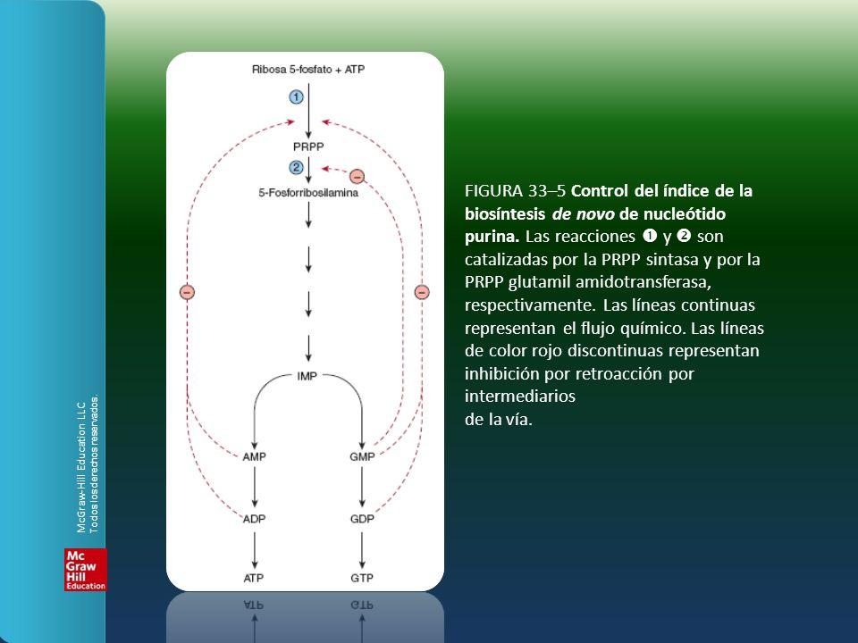 FIGURA 33–5 Control del índice de la biosíntesis de novo de nucleótido purina. Las reacciones y son catalizadas por la PRPP sintasa y por la PRPP glut